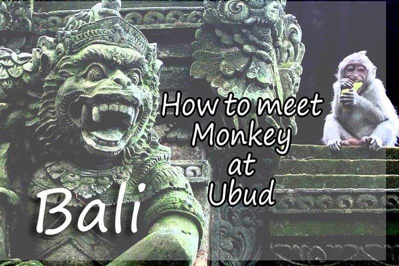 Monkey Forest di Ubud Bali