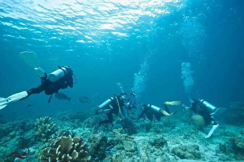 Aktivitas-Diving-di-Nusa-Dua