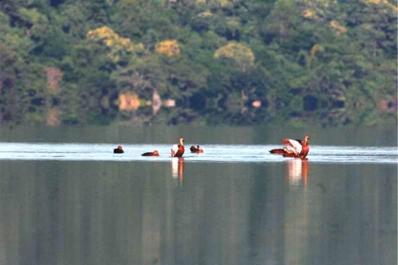 Lake Sano Nggoan Flores