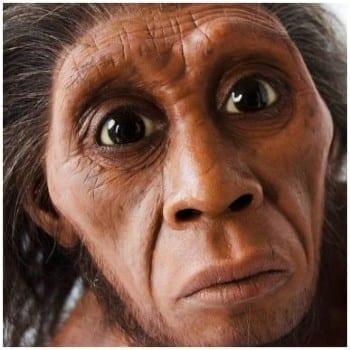 Floresiensis Homo
