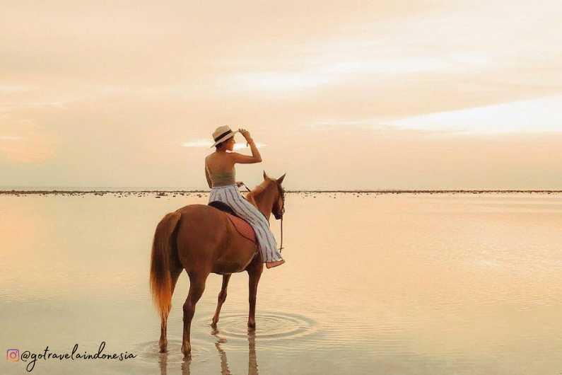 Kuda Gili Trawangan