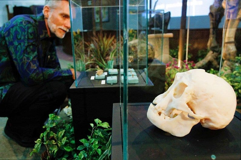 Museum-Homo-floresiensis