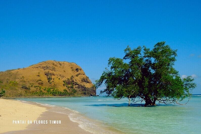 Pantai-Oa-Flores spot wisata di larantuka