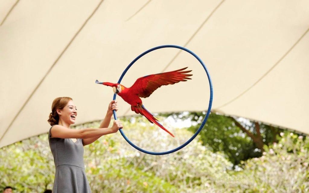 Aktifitas Wisata Anak Di Bali bird park